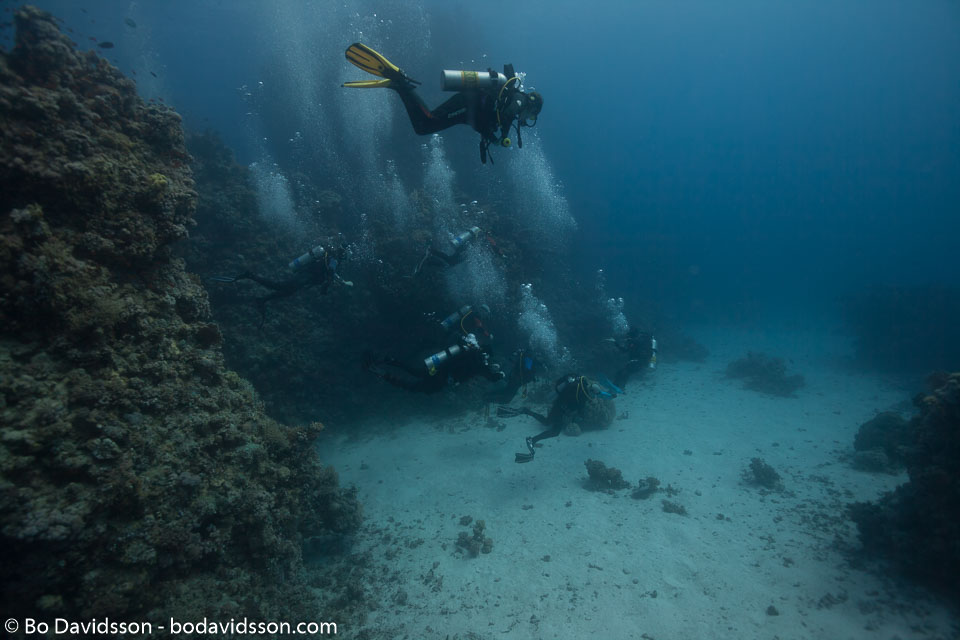 BD-120421-St-Johns-5965-Homo-sapiens.-Linnaeus.-1758-[Diver].jpg